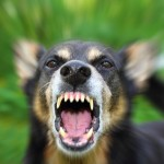 Some dogs bite  and you need to have insurance to protect you from lawsuits if they do!