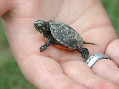Turtles can live over 100 years!